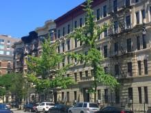 Prehistorie in New York (3) Ginkgo's langs een avenue
