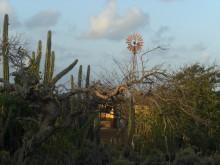 Wind (2) oude windmolen op Bonaire