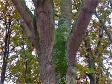 Bomenstromen (2) oude es nummer twee aan de Hofdijck